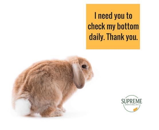 supreme-rabbit-bum