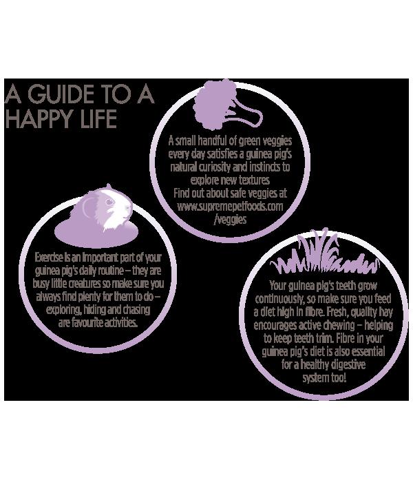 Grain-Free-Guinea-Happy-Guide