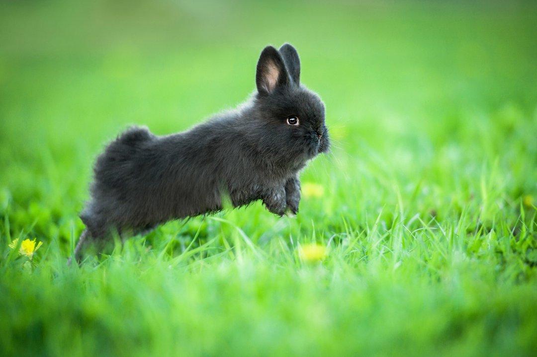 Rabbit-Binky