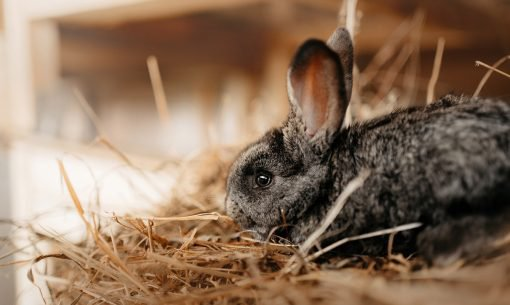 Keeping-Rabbits-Clean
