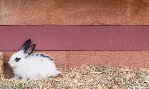 rabbit-hutch-s